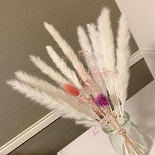 ドライフラワー パンパスグラス 17 テールリード 花材 インテリア(ドライフラワー)