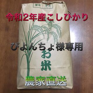 令和2年産コシヒカリ 5kg ぴよんちょ様専用(米/穀物)
