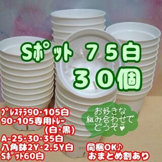 【スリット鉢】Sポット丸型75白30個 2.5号 プレステラ 多肉植物 プラ鉢(プランター)