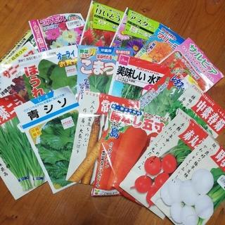 春まき野菜のタネ7種 Aセット(その他)