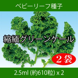 ベビーリーフ種子 B-08 縮緬グリーンケール 2.5ml 約610粒 x 2袋(野菜)