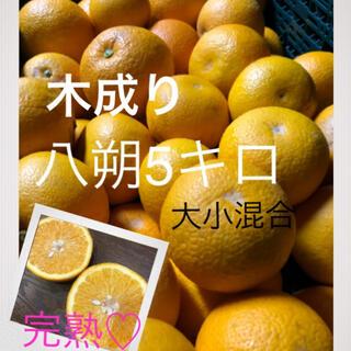 和歌山県産有田の木成り八朔大小ランダム10キロ(フルーツ)