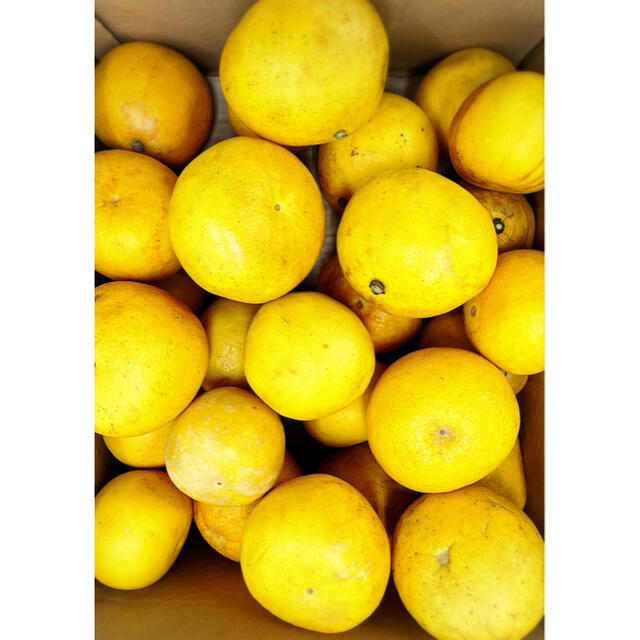 家庭用小玉【土佐文旦】M〜2L混合サイズ  箱含め約11kg 26玉前後 食品/飲料/酒の食品(フルーツ)の商品写真