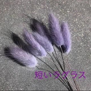 ドライフラワー 紫短いラグラス(ドライフラワー)