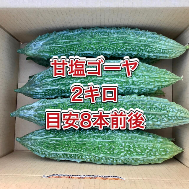 【鹿児島産】甘塩ゴーヤ箱込み2キロ^_^ 食品/飲料/酒の食品(野菜)の商品写真