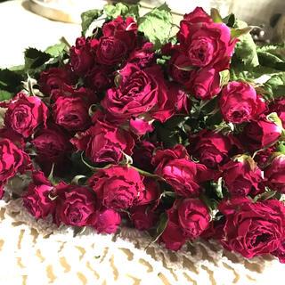 ミニ薔薇 ラブリーディア ドライフラワー(ドライフラワー)