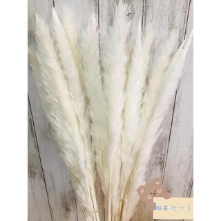ドライフラワー インテリア パンパスグラス20本 ハンドメイドスワッグ花材(ドライフラワー)