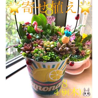 多肉植物❤︎寄せ植え❤︎このまま飾れます❤︎レモン缶♪🍋(その他)