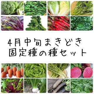 ★伝統野菜★4月中旬まきどき固定種の種セット(野菜)