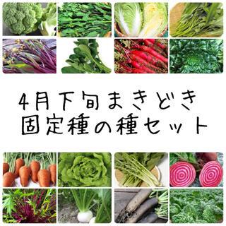★伝統野菜★4月下旬まきどき固定種の種セット(野菜)