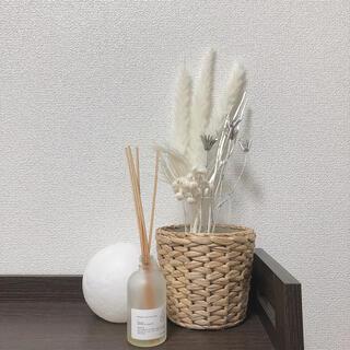 大人気 パンパスグラス テールリード 花材 インテリア ウェルカムスペース(ドライフラワー)