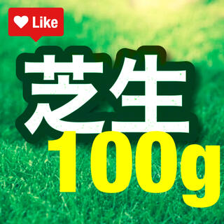 【説明書つき】高級芝生の種100g(2平米) 耐暑性あり!冬でも青い西洋芝生(その他)