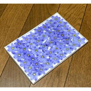 ⑧ 今日から銀の紫陽花 春の100円お値引きセール始まりました‼️(ドライフラワー)