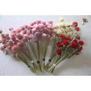 xkimix様専用千日紅ピンク2種&白&赤 4色 120本&ラグラス15本(ドライフラワー)