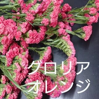 生花スターチス☆グロリアオレンジ ヘッド40本(ドライフラワー)