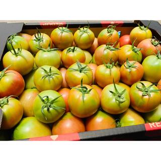 【規格外】ソムリエトマト 小玉5kg(65玉〜90玉) (野菜)