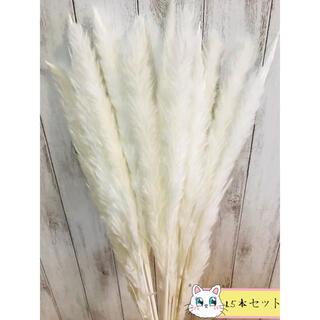ドライフラワー インテリア パンパスグラス15本 ハンドメイドスワッグ花材 (ドライフラワー)