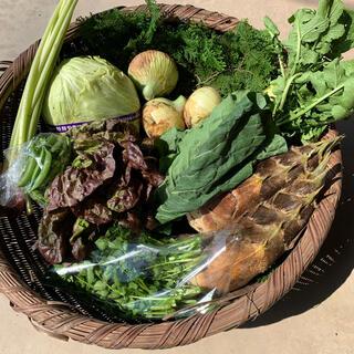 無農薬春野菜セット6種類以上 サイズ100 タイムセール  (野菜)