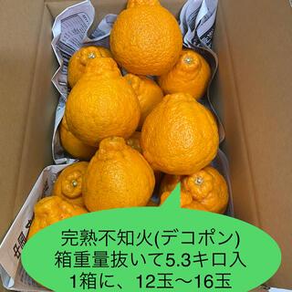 Gステラ様専用!ハウス栽培、完熟デコポン、3L~5L、10.6キロ!ご家庭用(フルーツ)