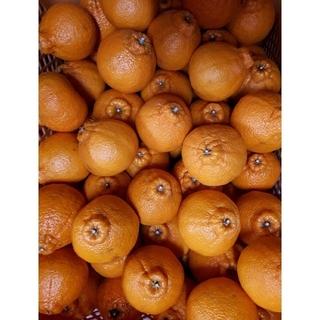 香川県産 柑橘 みかん デコポン5キロ(フルーツ)