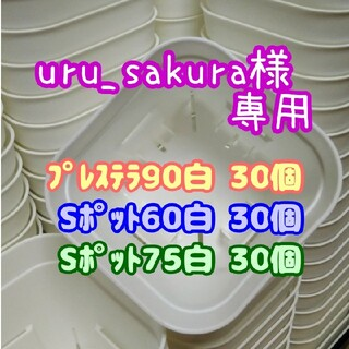 【スリット鉢】プレステラ90白30個 他 多肉植物 プラ鉢(プランター)
