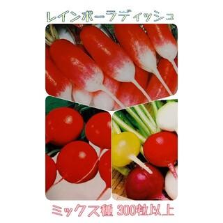 春まき レインボーラディッシュ 野菜種 はつか大根(野菜)