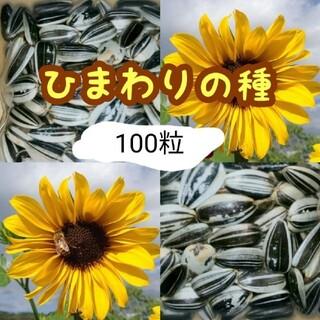 【匿名配送】大きくそだつひまわりの種 約100粒 春蒔き種子(野菜)
