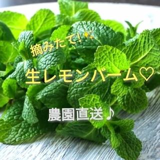 希少✨新芽摘みたて!!生レモンバーム♥農園直送♪✨(野菜)