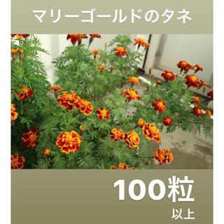 マリーゴールド 品種ミックス 花 種 100粒以上(その他)