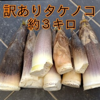 訳あり  傷あり  タケノコ  竹の子  たけのこ  筍  無農薬  野菜