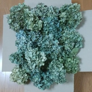【好~様確認用】アジサイドライフラワー青緑~緑青~緑系大中小ヘッド17(ドライフラワー)