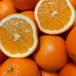 静岡県産ネーブルオレンジ(フルーツ)