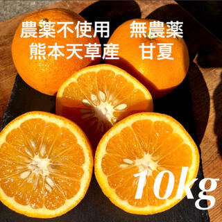 農薬不使用 無農薬 甘夏 10kg 熊本天草産(フルーツ)