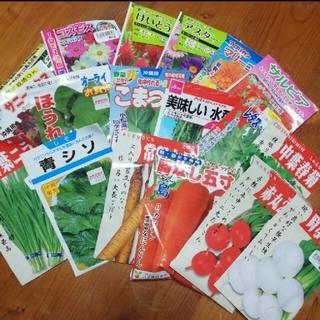 春まき野菜のタネ7種セット(その他)