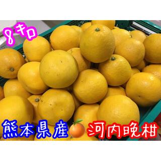 熊本県産 河内晩柑 8㌔セット(フルーツ)