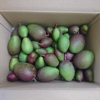 宮崎産 未成熟マンゴー 箱込み5kg(フルーツ)