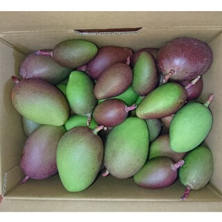 宮崎産 未成熟マンゴー 3kg(フルーツ)