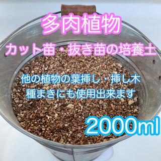 多肉植物の土 サボテンの土 多肉植物用土(その他)