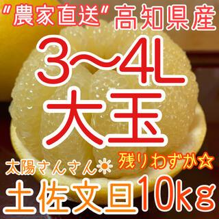 高知県産 土佐文旦 ぶんたん 10kg 大玉3~4L(フルーツ)