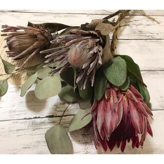 花材 プロテア シャロン&カーニバル&ピンクアイス ドライフラワー