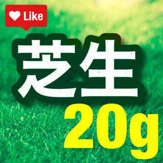 【説明書つき】高級芝生の種。お試し価格!20g(0.4平米) 冬でも青い西洋芝生(その他)