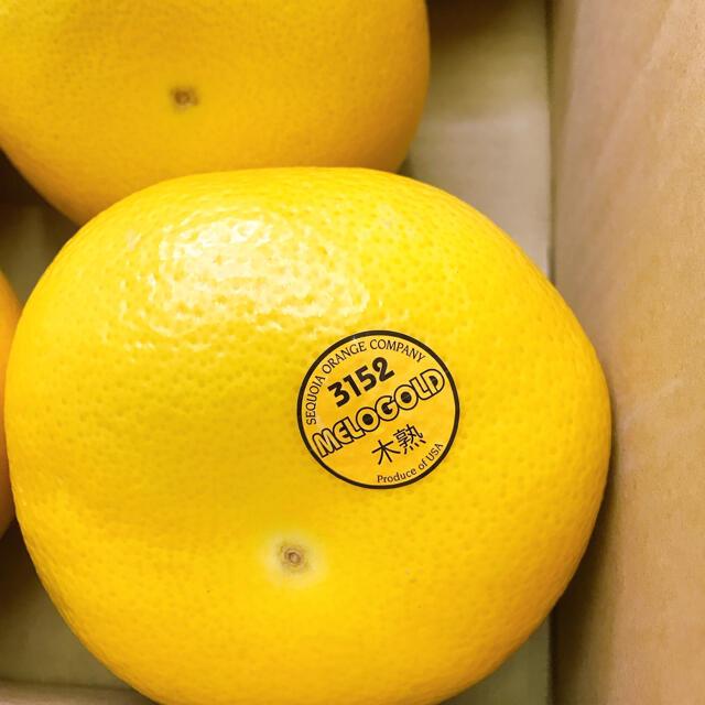 アメリカ産 木熟 メロゴールド8玉 食品/飲料/酒の食品(フルーツ)の商品写真