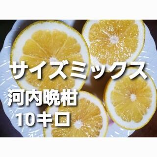 熊本県産 河内晩柑 10キロサイズミックス(フルーツ)