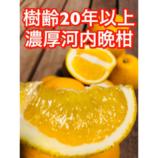 宇和島産 ブラッドオレンジジュース 河内晩柑ジュース 河内晩柑のおまけ付き 食品/飲料/酒の食品(フルーツ)の商品写真