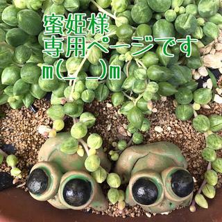 現品  トラカン ラベンダー7本  水色ゴム + 胡蝶の舞6本緑色ゴム(その他)