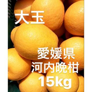 愛媛県 宇和ゴールド 河内晩柑 大玉 15kg(フルーツ)