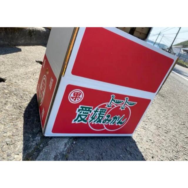 愛媛県 宇和ゴールド 河内晩柑 大玉 5kg 食品/飲料/酒の食品(フルーツ)の商品写真