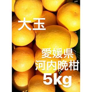 愛媛県 宇和ゴールド 河内晩柑 大玉 5kg(フルーツ)