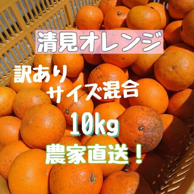 清見オレンジ 10kg サイズ混合 ご家庭用 食品/飲料/酒の食品(フルーツ)の商品写真