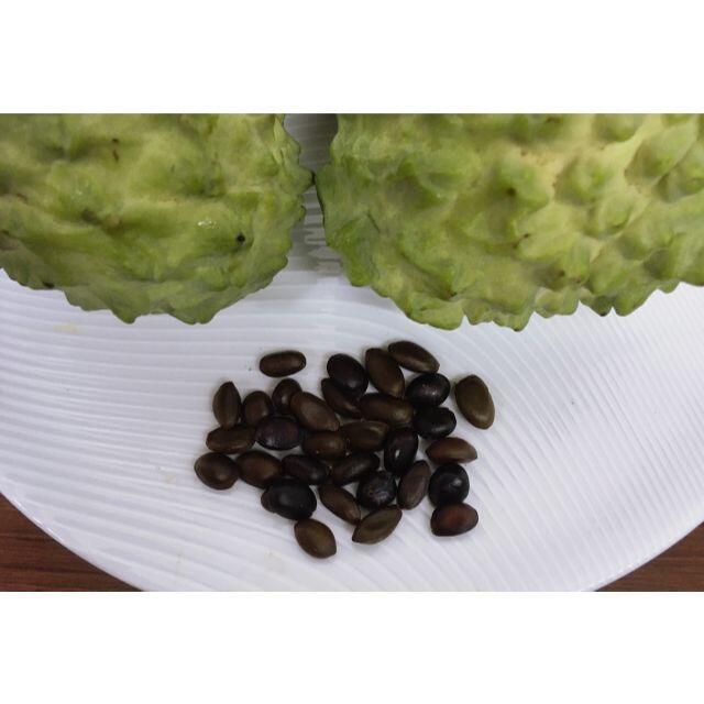 沖縄産 高級フルーツ アテモヤの種子 30粒 食品/飲料/酒の食品(フルーツ)の商品写真